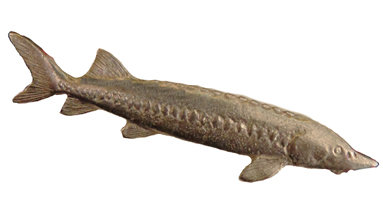 Sturgeon Pewter Pin (SKU 1031416611)